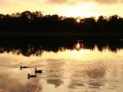 Enten am Kuhsee im Sonnenuntergang