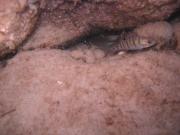2004-Unterwasseraufnahme Kuhsee Fisch